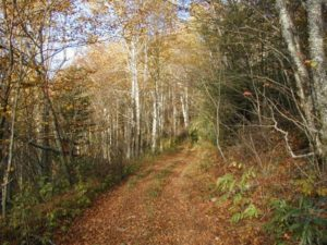 Cover photo for Timber Sales: A Planning Guide for Landowners