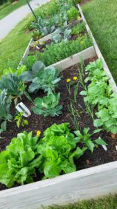 Cover photo for References for Successful Vegetable Gardening