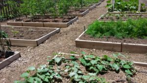 Raised beds for vegetable production